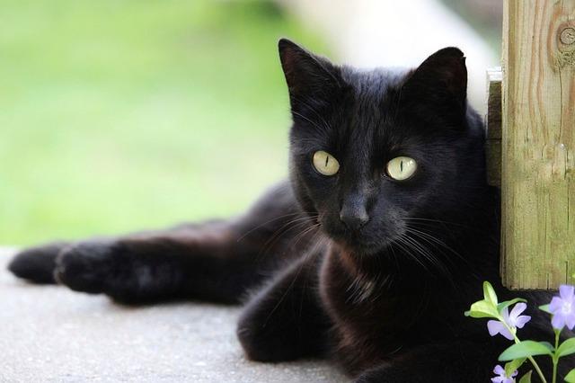 黒猫の迷信!日本と海外の違いは?
