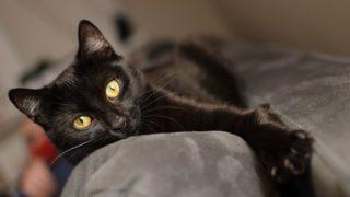 黒猫はカワイイですよ!