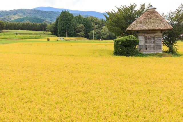 世界中にある収穫祭